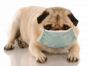 вирусни заболявания при животните