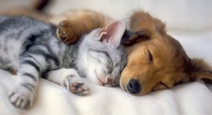 обезпаразитяване при кучето и котката