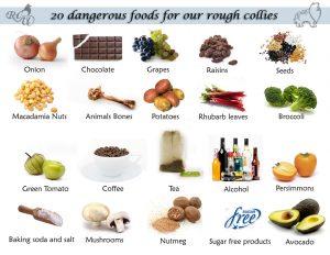 вредни храни за кучето и котката