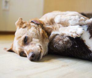 панкреатит куче