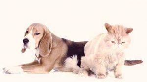 възрастни куче и котка