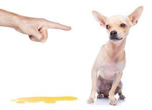 пикае куче вкъщи