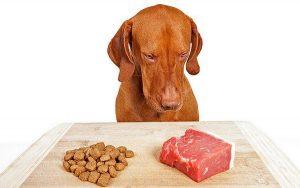 храна куче