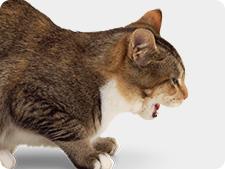 кашля котка