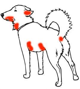 алергия храна куче