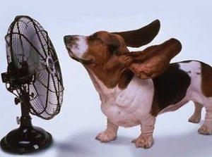 куче горещо време