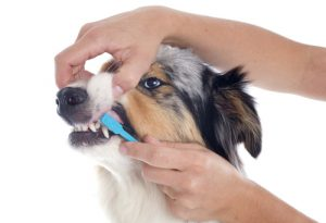 четка зъби куче