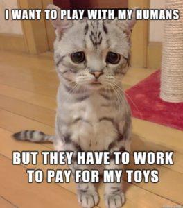 тъжна котка