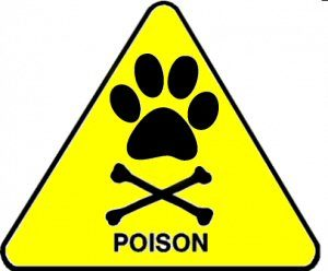 отрова куче