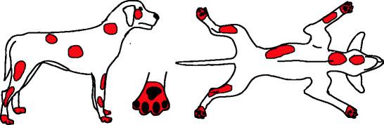 сърбеж куче