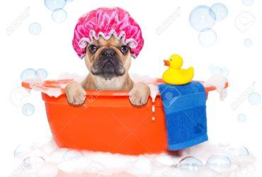 Колко често е добре да къпем нашето куче?