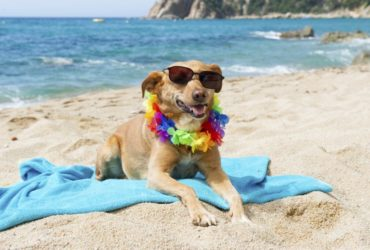 За какво да внимаваме, когато сме на море с нашето куче?