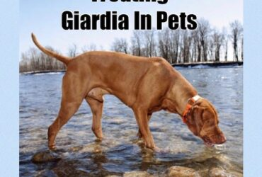 Гиардия при кучетата и котките