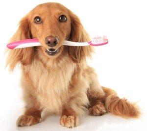 стоматология при домашните любимци