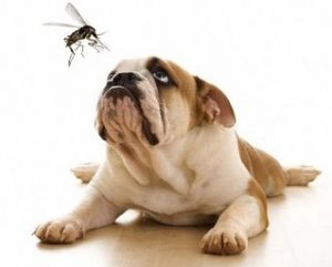 дирофилария при кучетата