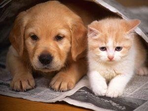 вътрешно обезпаразитявне при кучетата и котките