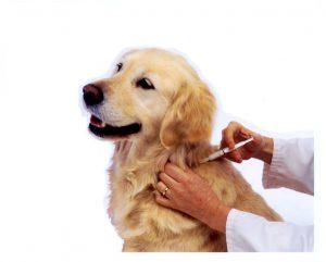 ваксиниране куче и котка