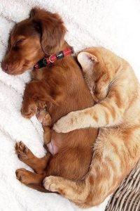 малко кученце и котенце