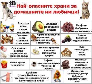 опасни храни за кучето и котката
