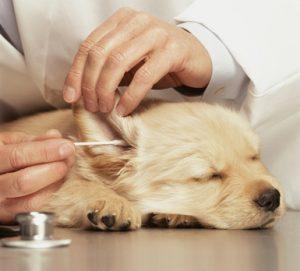 чистене на уши куче