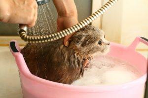 къпане котка