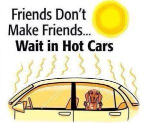 куче в кола лятотот