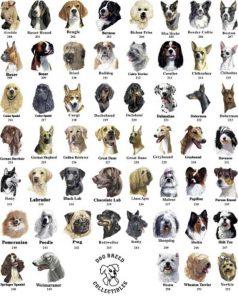 порода куче