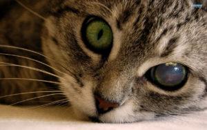 око котка