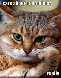 проблем котка
