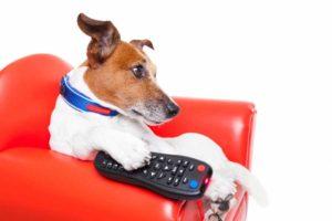 телевизия куче