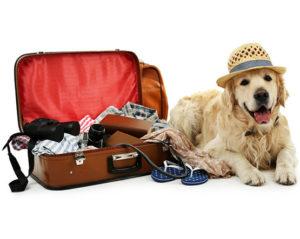 летен отпуск Ветеринарен кабинет