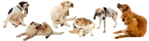 породи кучета алергия сърбеж