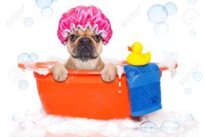 къпане куче