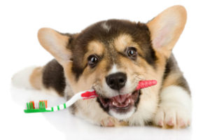 зъбен камък куче